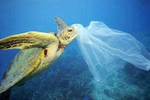 La presencia de plásticos en los océanos es una de las grandes amenazas que afectan a la salud de los ecosistemas marinos.