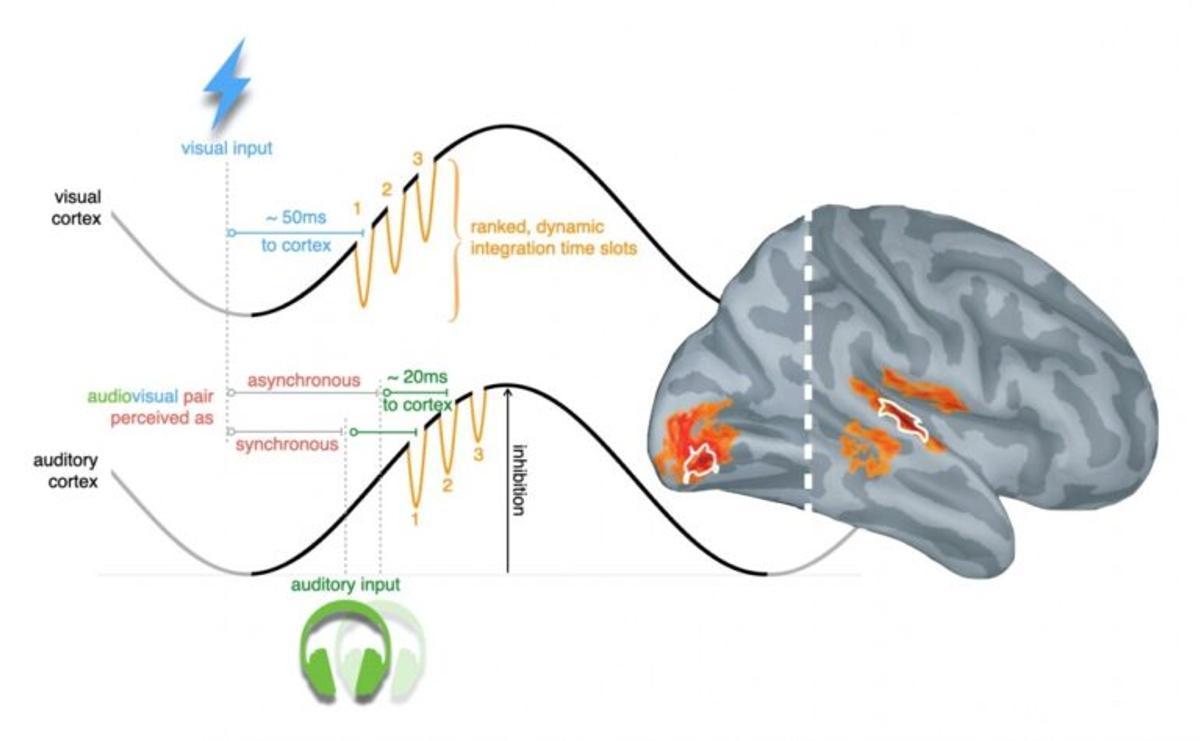El cerebro nos engaña: integra visión y sonido como un todo