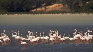 Flamencos en el Parque Nacional de Doñana.