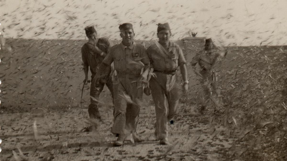 Soldados españoles en medio de una plaga de langostas en Sidi Ifni, en 1959.