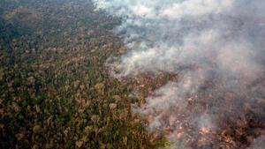 La desforestació a l'Amazònia brasilera arriba al nivell més gran en una dècada