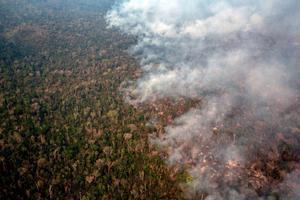 El estado más afectado, con 13.641 focos, es el de Mato Grosso, que se extiende por gran parte de la Amazonía.