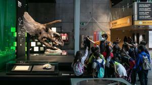 El cráneo del triceratops que CosmoCaixa adquirió en 1999, una de las joyas fósiles del museo.