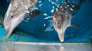 Delfines en un zoológico.