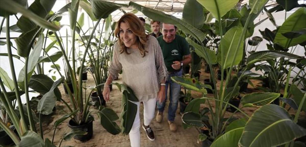 La presidenta de Andalucía, Susana Díaz, durante la visita a un vivero en Sevilla el pasado mes de julio.