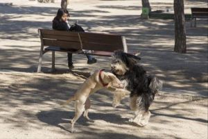Imagen de archivo de dos perros jugando en Mataró.
