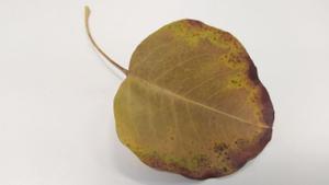 ¿Por qué se secan las puntas de las hojas de las plantas? Trucos para evitarlo