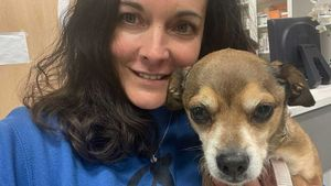Allau de peticions per adoptar el Leo, el gos que va sobreviure al ganivet d'un parricida