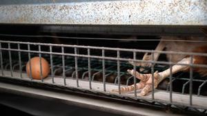 Las patas de una gallina muerta, junto a un huevo, en un video de denuncia de Equalia.