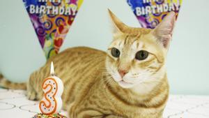Quince contagiados de covid tras acudir a la fiesta cumpleaños de un gato