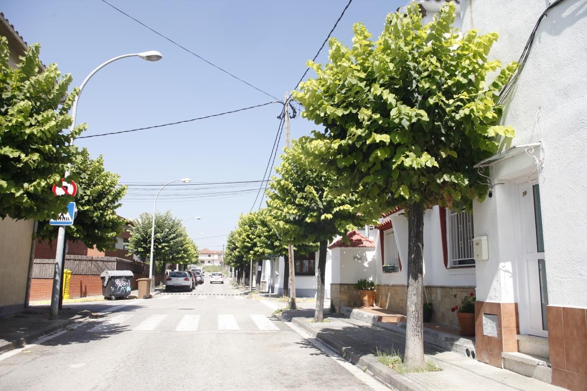 Árboles del Barri Cerdanet, Parets del Vallès